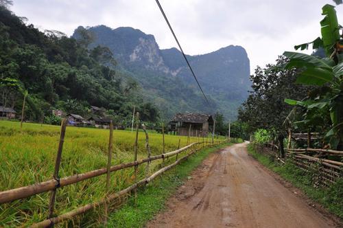 Đường đến động Hua Mạ xuyên qua những cánh đồng thơm hương lúa.