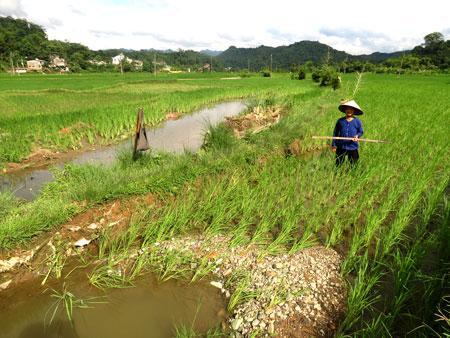 Một phần ruộng lúa bị đất đá vùi lấp đang được bà con xã Vi Hương khắc phục.