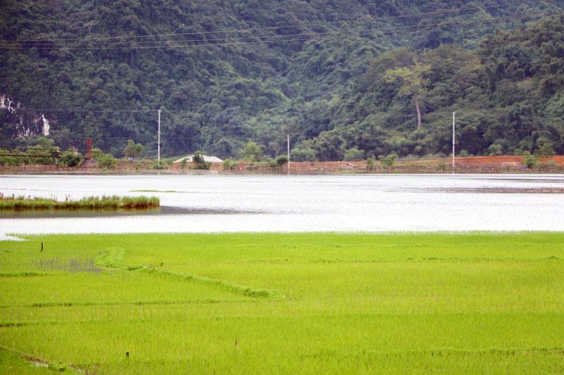 Nước lũ gây ngập lúa và hoa màu tại cánh đồng xã Nam Cường