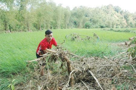 Anh Hào Vũ Nhã khắc phục diện tích lúa của gia đình bị vùi lấp do mưa lũ