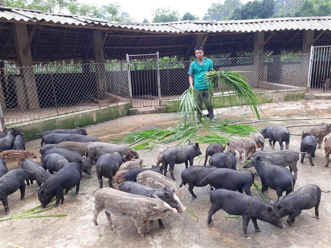 Trang trại chăn nuôi hiệu quả trên đỉnh núi của Chu Quang Phúc góp phần làm thay đổi nhận thức của đồng bào vùng cao