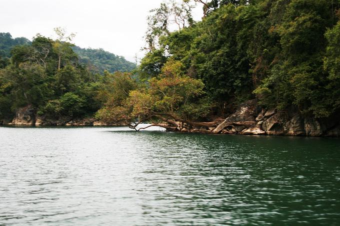 Càng đi xa bến thuyền, nước hồ Ba Bể như càng xanh trong hơn. Với nguồn nước dồi dào và khí hậu thích hợp, hệ động thực vật ở hồ Ba Bể được xếp vào hạng phong phú bậc nhất ở Việt Nam. Bạn có thể bắt gặp những nhánh cây vươn dài ra mặt hồ khi đi thuyền qua.