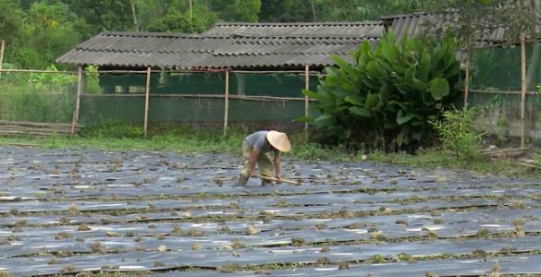 Người dân làm đất chuẩn bị trồng ớt