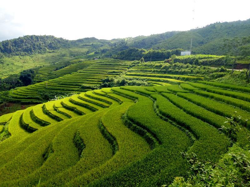 Vẻ đẹp ruộng bậc thang ở thôn Lủng Phặc, xã Cổ Linh.