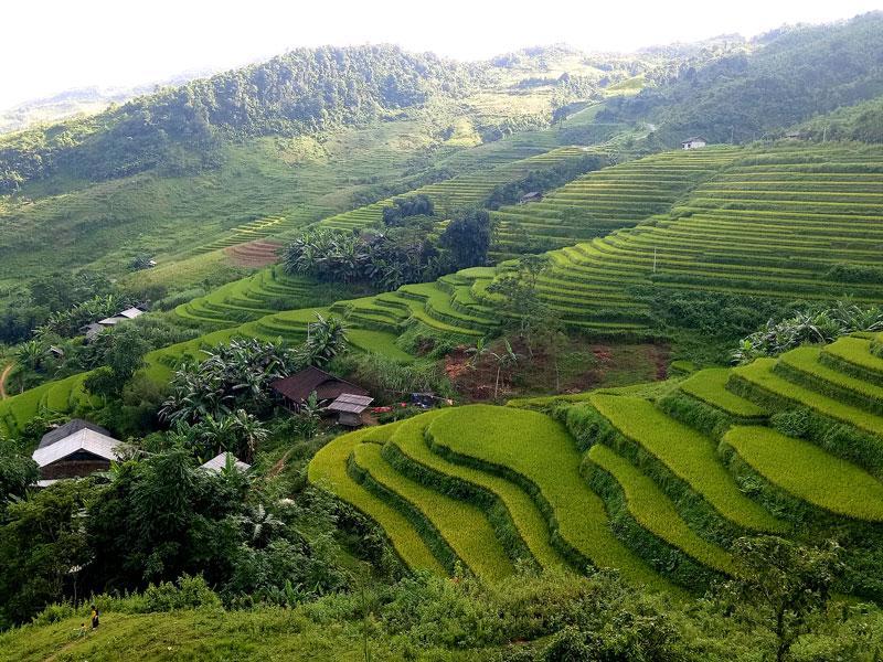 Những thửa ruộng lúa còn xanh tạo nên màu sắc với phong cách riêng ở huyện vùng cao Pác Nặm.