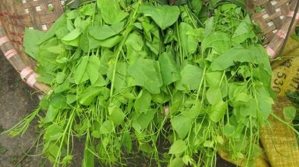 Từ rau bò khai có thể chế biến thành nhiều món ăn đa dạng như rau bò khai xào tỏi, canh rau bò khai, rau bò khai xào trứng,...(Nguồn Tacdungcuacay)