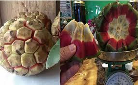 Na rừng có kích thước khá lớn, mỗi quả trung bình từ 600 - 1kg:Nguồn Dân Việt