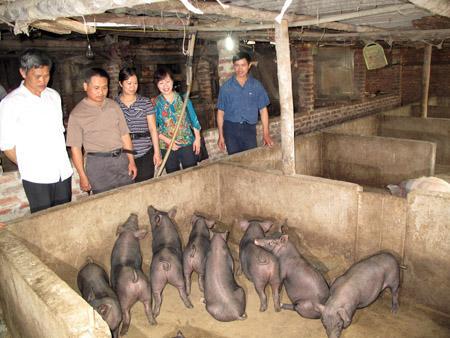 Anh Hà Văn Mạn (phải) và giống lợn đen địa phương nổi tiếng của mình.