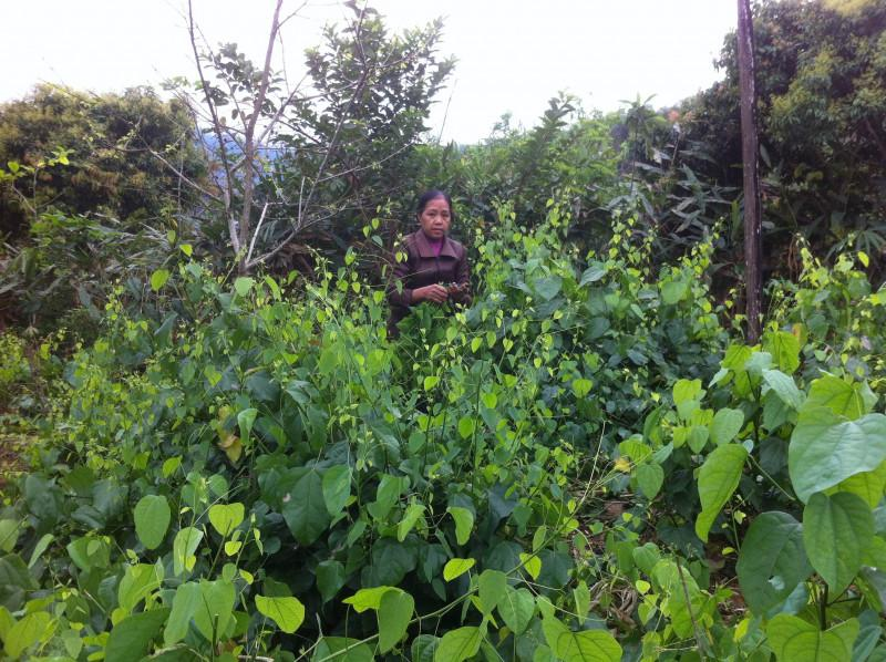 Chị Liêu Thị Hợp bên vườn rau bò khai