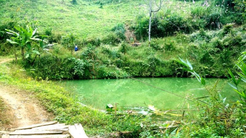 Cùng với 3 ao nuôi thủy sản và hơn 2 ha rừng trồng đang thời kỳ khai thác.