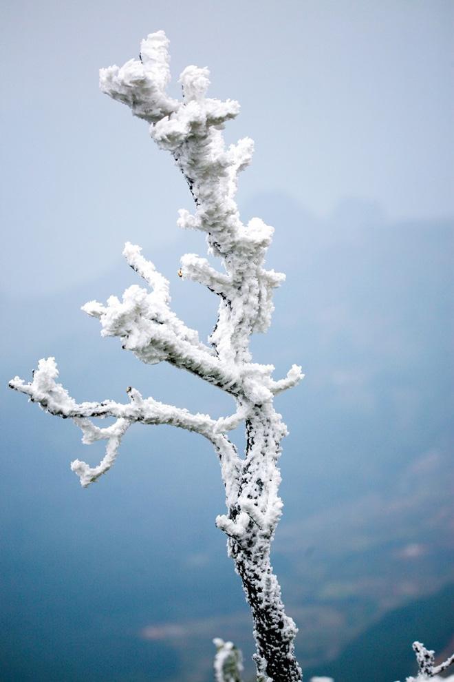Cành cây khô nhuộm trắng trong băng tuyết. Ảnh: Sưu tầm