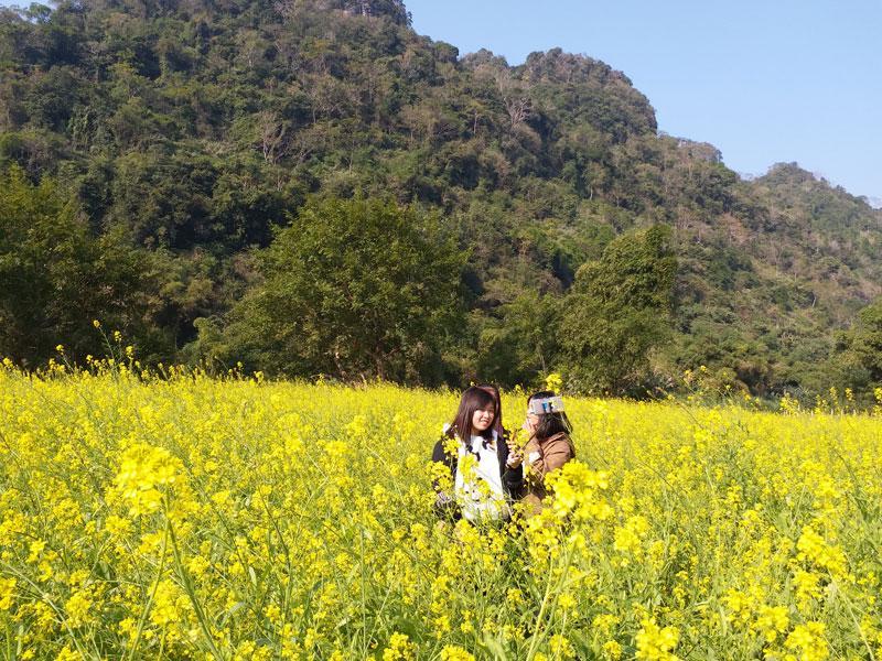 Vườn hoa cải thu hút nhiều bạn trẻ đến tham quan, chụp ảnh lưu niệm