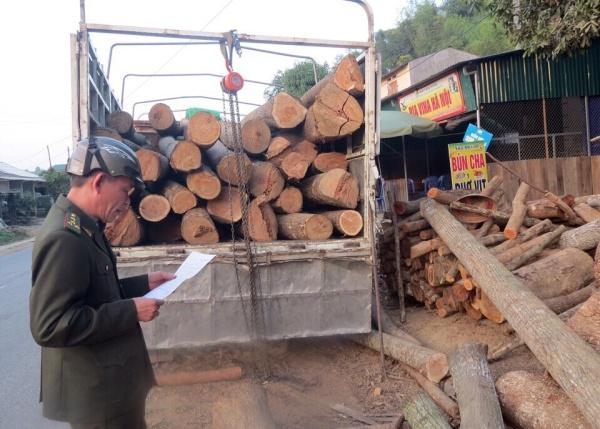 Cán bộ Kiểm lâm huyện Bạch Thông kiểm tra nguồn gốc gỗ tại xã Quảng Bình.