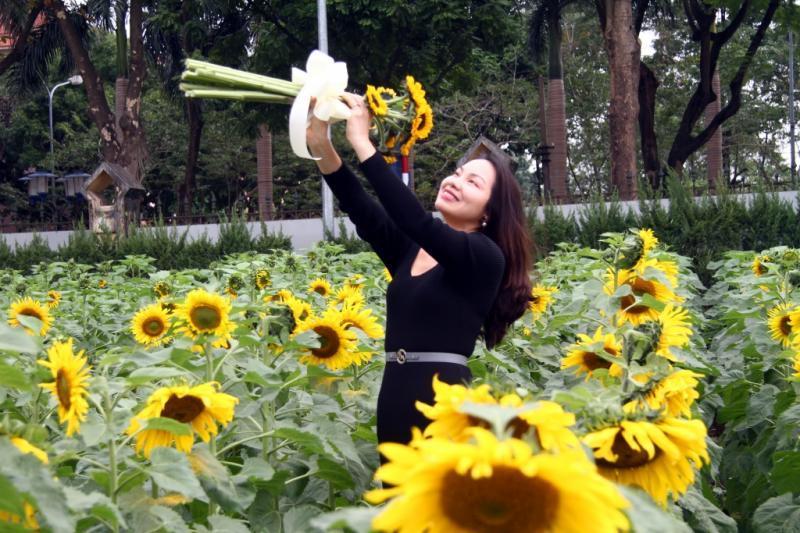 Nhiều du khách thích thú chụp ảnh tại vườn hoa hướng dương.