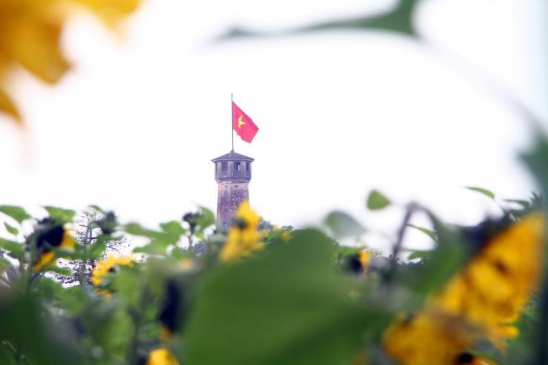 Cột cờ Hà Nội nhìn từ vườn hoa hướng dương.