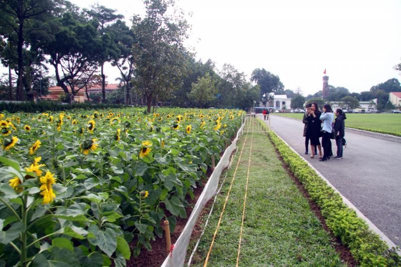 Dọc theo 2 vế đường Nguyễn Tri Phương và đường Hoàng Diệu.
