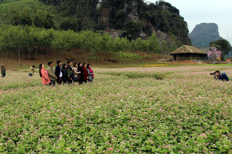 Nằm gần đường Thái Nguyên- Chợ Mới, cánh đồng hoa tam giác mạch tại thôn Đồng Luông thu hút đông đảo du khách đến tham quan.
