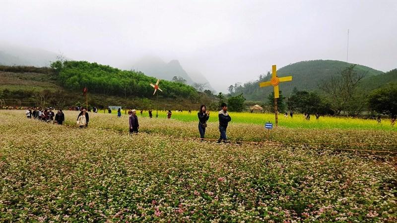 Thung lũng hoa tam giác mạch thu hút hàng ngàn du khách đầu năm.