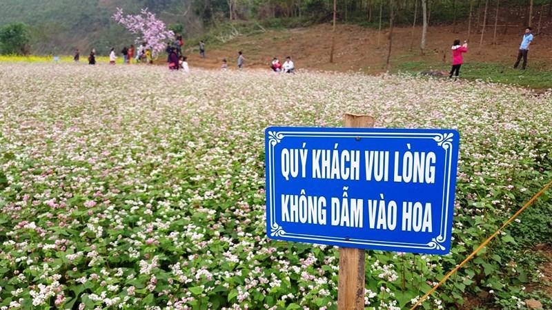 Ai cũng ý thức phải giữ gìn hoa.