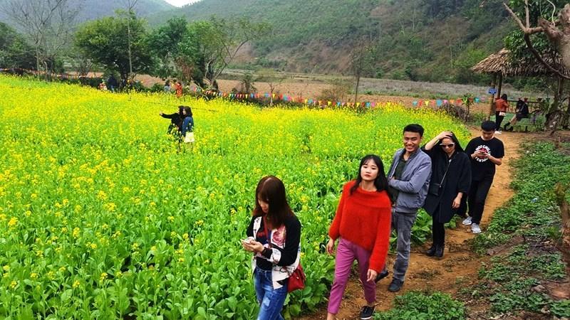 Thung lũng hoa cải thu hút nhiều bạn trẻ.