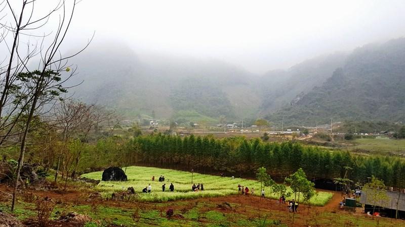 Thung lũng hoa nhìn từ trên cao xuống.