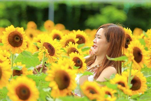 Vườn hoa mở cửa cho khách tham quan với giá vé 30.000 đồng/người.