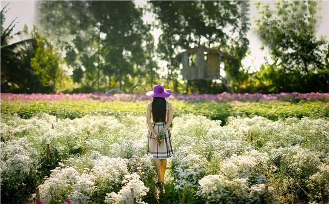 Buổi sáng, khi hoa tươi còn đọng sương mai, ánh mặt trời dịu nhẹ là lúc chụp ảnh đẹp nhất trong ngày. Nếu muốn chụp cùng ráng chiều thì bạn có thể chọn khoảng thời gian từ 4h - 5h cũng khá ổn nhưng khó để ảnh toát lên vẻ đẹp tự nhiên của hoa. Vì vậy nên đi sớm để có những shot hình ưng ý, đồng thời tránh đám đông, nhất là vào ngày cuối tuần - Ảnh: Bùi Gia Huy