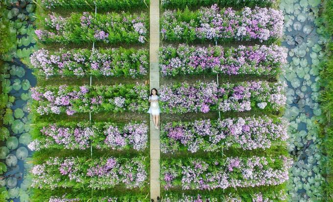 Cách trung tâm thành phố Mỹ Tho (Tiền Giang) khoảng 10 km, đủ loại hoa ở vườn Mãn Đình Hồng làm say lòng du khách mỗi khi ghé thăm ngắm cảnh, chụp ảnh - Ảnh: Toan Nguyen Thanh