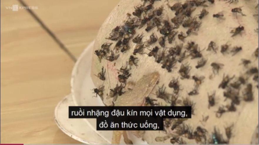 Đâu đâu cũng xuất hiện ruồi từng