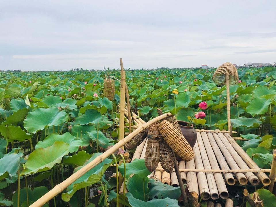 Cận cảnh đầm sen đang mùa nở rộ tại Thái Bình. (Ảnh: Viet Tien Nguyen)