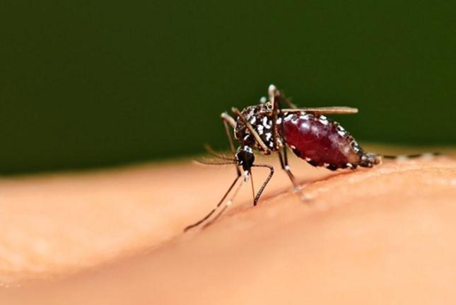 Mặc dù cánh đàn ông bị muỗi đe dọa nhiều hơn nhưng bạn gái cũng phải cảnh giác cao độ với lũ muỗi này.