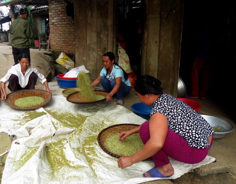 Cứ đến mùa nếp chín, phụ nữ các xã ở Bạch Thông lại cùng nhau làm cốm.