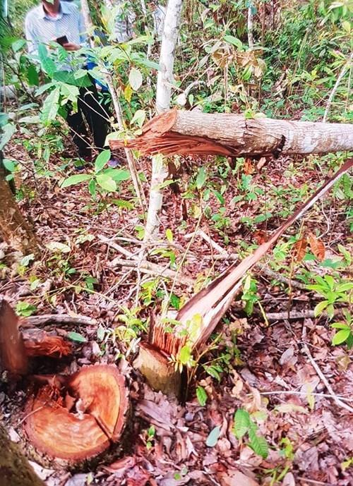 Ảnh hiện trường vụ phá rừng ở An Thắng