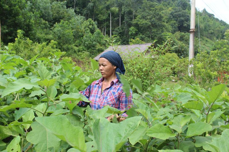 Bà Trịnh Thị Thơm ở thôn Cốc Thử, xã Ngọc Phái (Chợ Đồn) là một điển hình trong phong trào Nông dân thi đua sản xuất kinh doanh giỏi.
