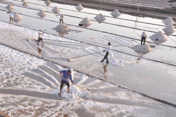 Những ô muối trắng tinh, chạy dài. (Nguồn: aigonphoto.net)
