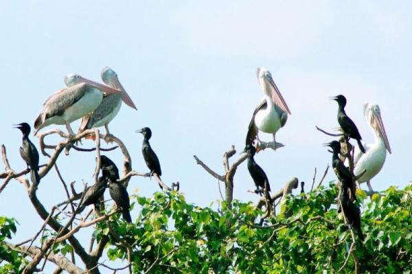 Vườn chim Bạc Liêu. (Nguồn: toplist.vn)