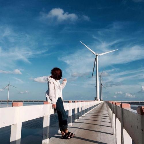Cánh đồng quạt gió ở Bạc Liêu. (Nguồn: nhirabitee)
