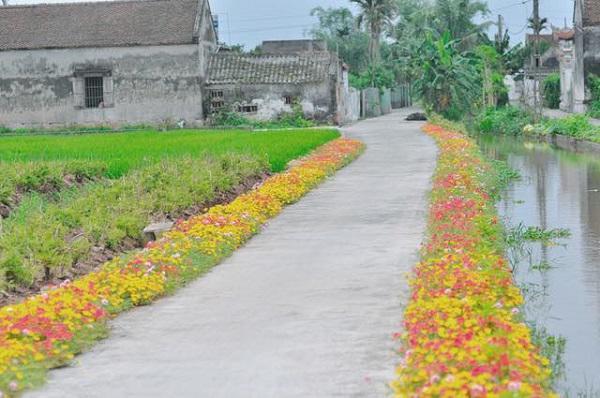 Con đường hoa trải dài các xã Hải Tây, Hải Đông, Hải Quang,... dài tới 200km.
