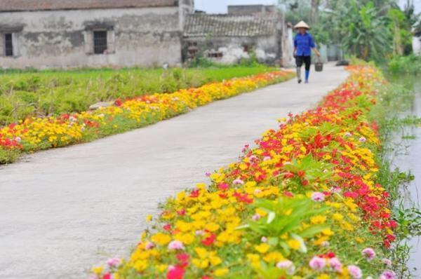 Hình ảnh con đường trải đầy hoa rực rỡ mà anh chàng T.H chia sẻ trên mạng xã hội.