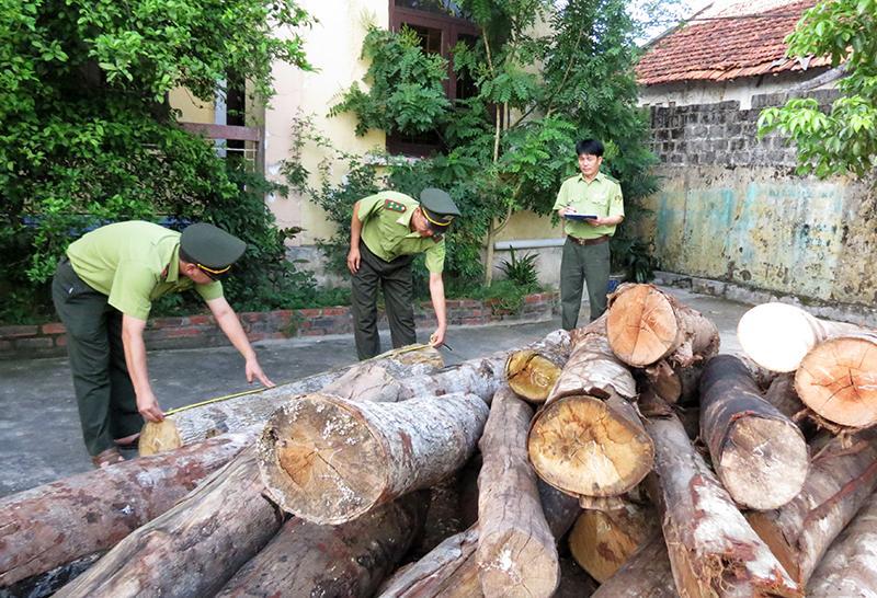 Hạt kiểm lâm Ba Chẽ kiểm điếm số gỗ bị thu giữ