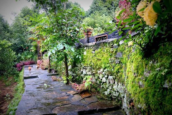 Lối đi phủ đầy rêu phong dẫn vào ngôi nhà cổ lâu đời nhất làng Lộc Yên
