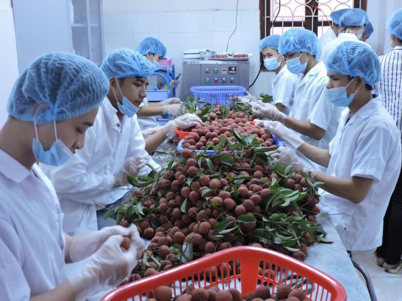 Các mặt hàng nông sản của Việt Nam, nếu có quy trình canh tác chuẩn, đạt tiêu chuẩn của các bạn hàng thì thị trường sẽ tự động được khai thông