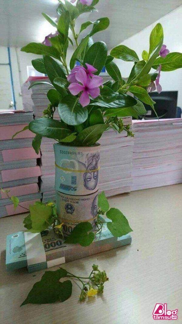 Được lì xì nhiều quá không biết làm gì đành đem ra trồng hoa vậy.
