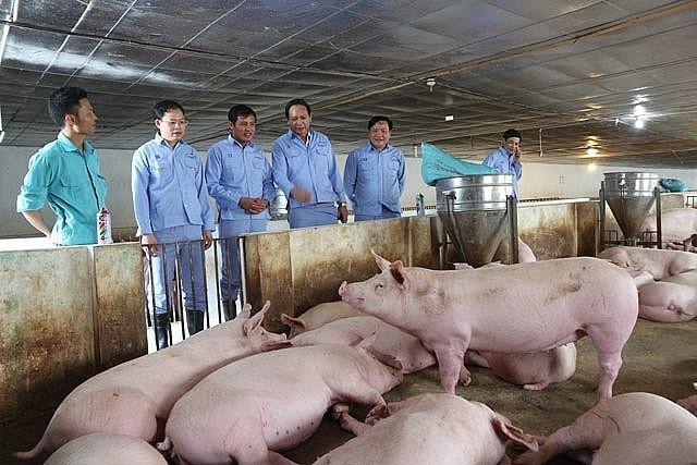 Nhiều trang trại không còn lợn hơi để bán. Ảnh minh hoạ.