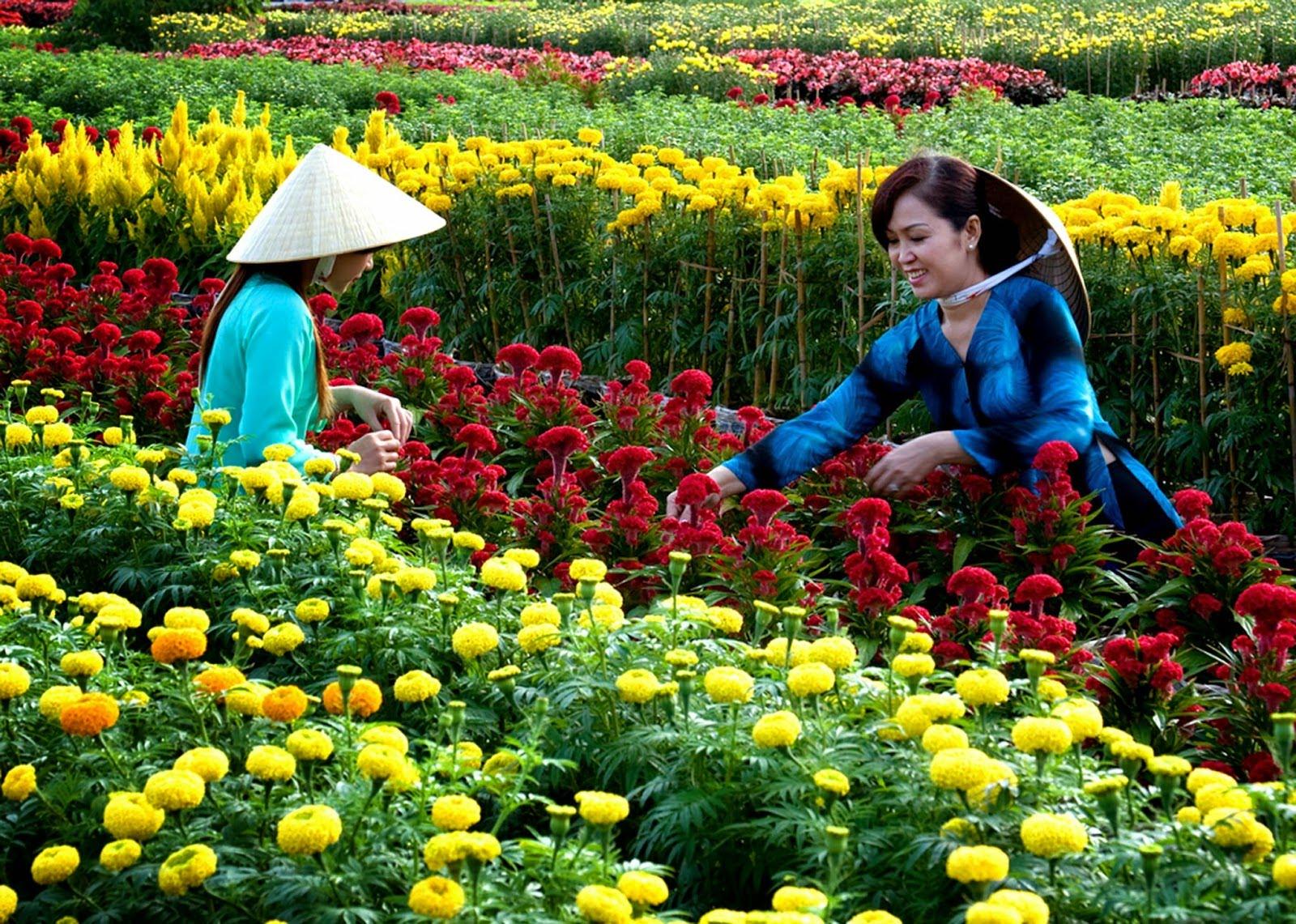Thưởng thức hoa