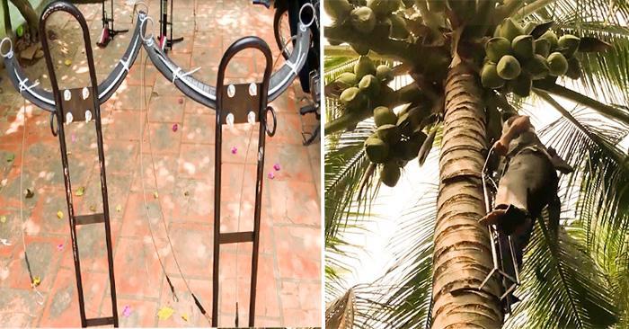 Bộ dụng cụ leo dừa thẳng đứng của kỹ sư Đồng Nai. (Ảnh từ clip)