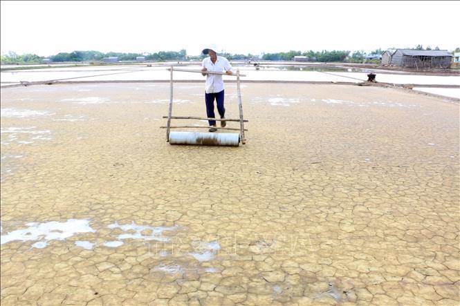 Ông Nguyễn Văn Dũng, xã Bảo Thạnh, huyện Ba Tri lăn khuôn để xuống muối đợt mới.