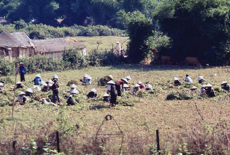Những người nông dân trên cánh đồng. Ảnh: James Speed Hensinger.