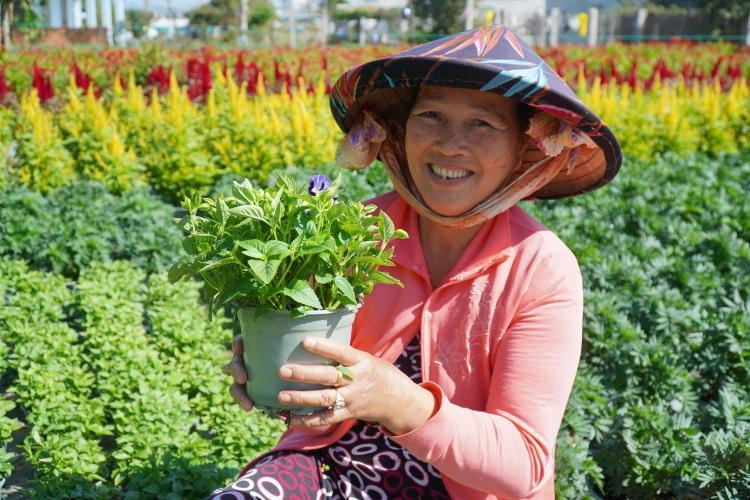 Bà Ngô Thị Ánh đang chăm sóc hoa trong vườn, vụ này lãi khoảng 80 triệu đồng. Ảnh: Việt Quốc.