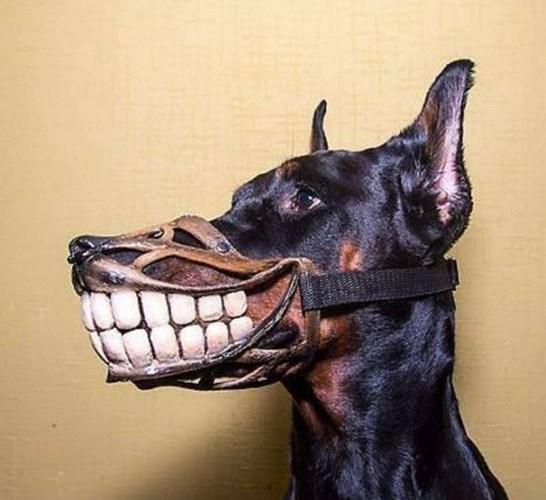 Trên mạng xã hội, dân tình rần rần hiến kế cho chủ chó những chiếc